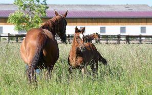 LOLITA : cheval à vendre